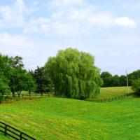 Что вам понадобится при покупке земельного участка?