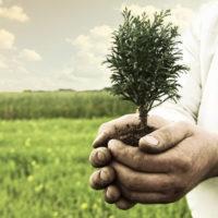 как составить дарственную на земельный участок образец