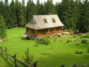 Как приватизировать землю в садоводстве: 7 основных стадий