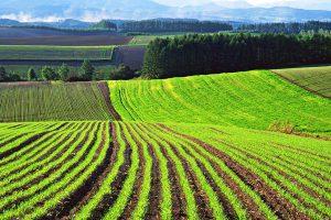 Какие бывают категории земель по Земельному кодексу