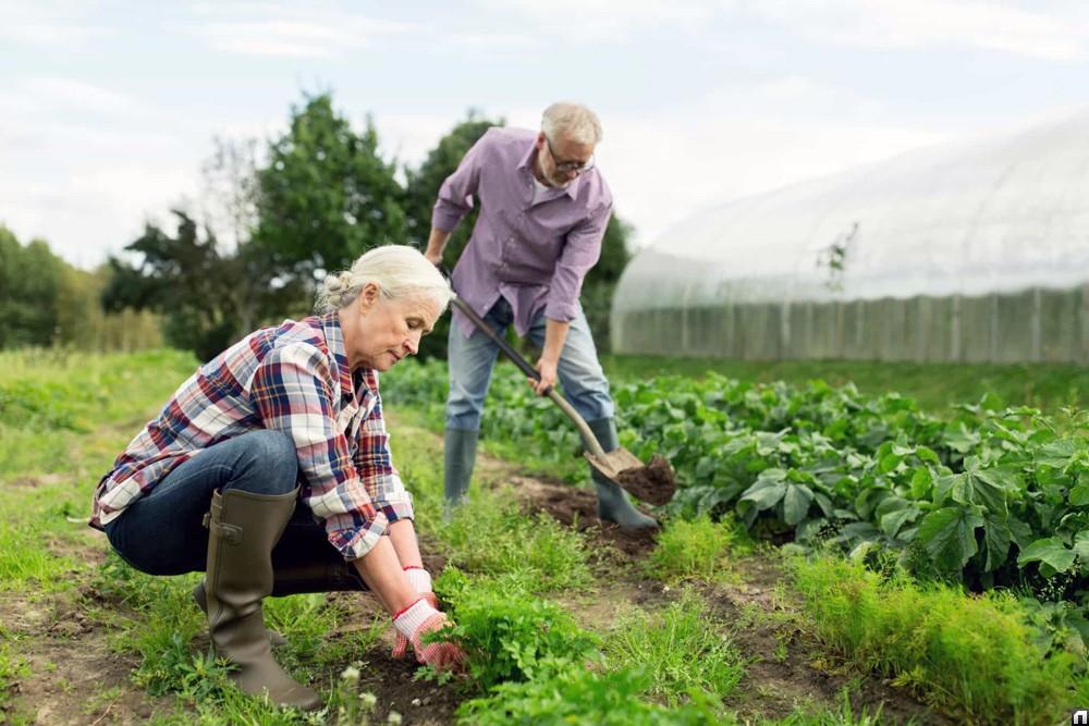 Земельный налог: кто освобожден от уплаты, а кто выплачивает по льготам?